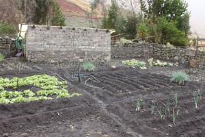 potager avec micro-irrigation